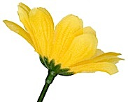 flor amarilla lateral