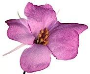 foto flor web 2