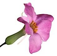 foto flor web